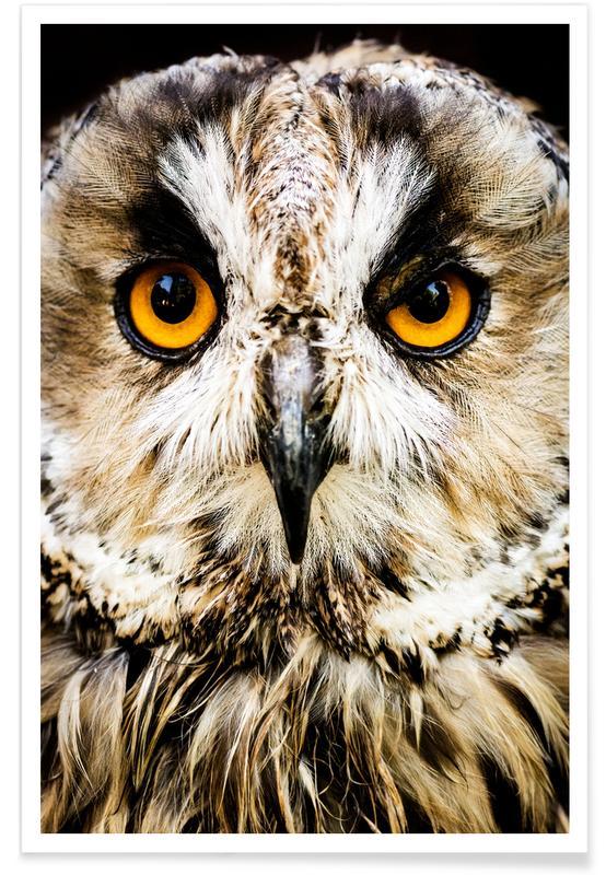 Hedwig Plakat
