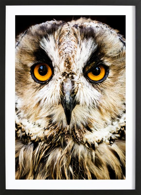 Hedwig Poster i träram