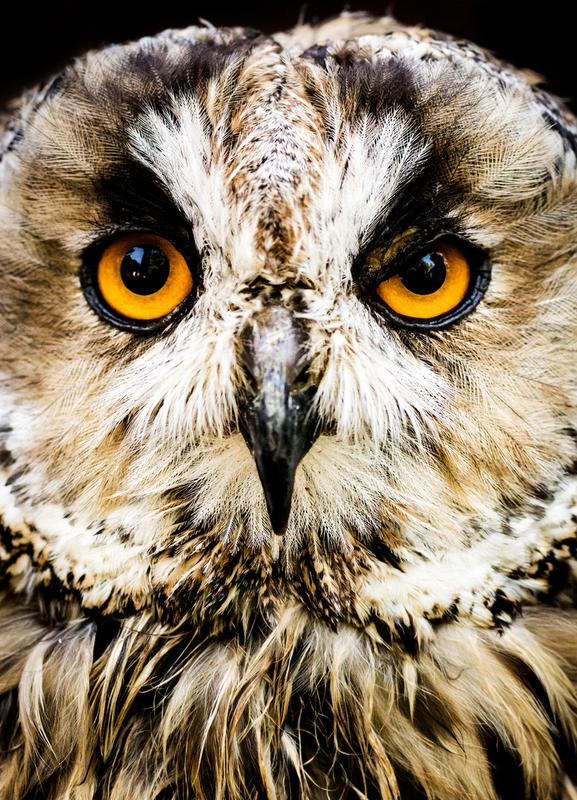 Hedwig Canvastavla