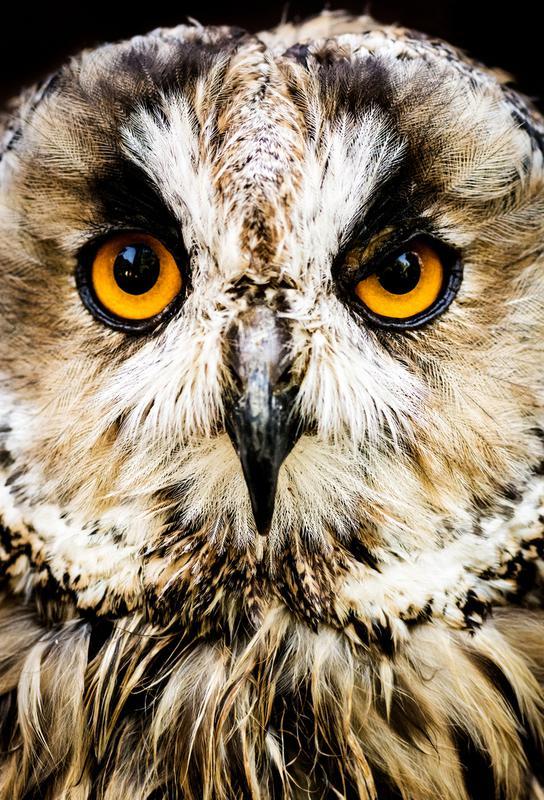 Hedwig Aluminiumtavla
