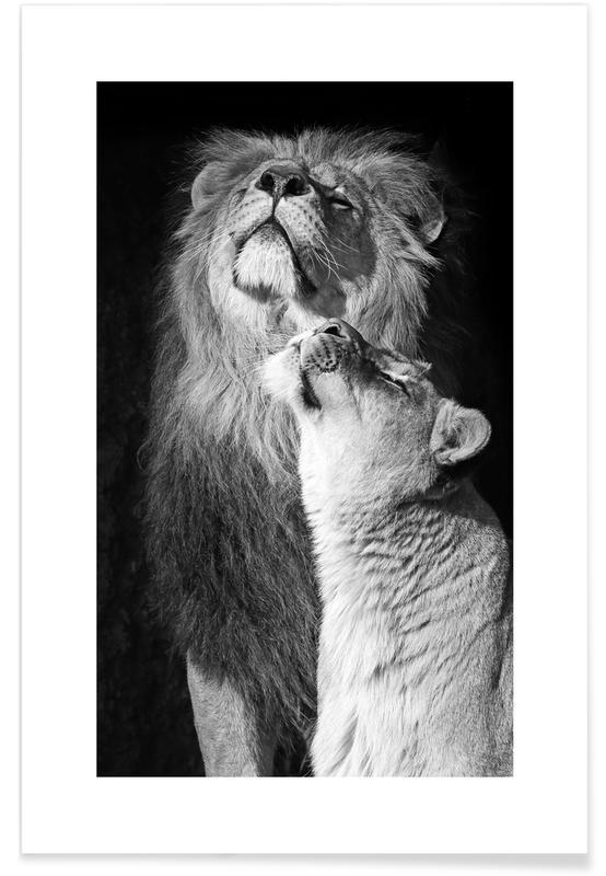 Børneværelse & kunst for børn, Sort & hvidt, Safari dyr, Lions in Love Plakat