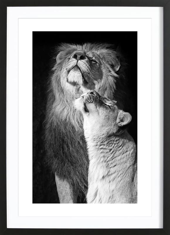Lions in Love Framed Print