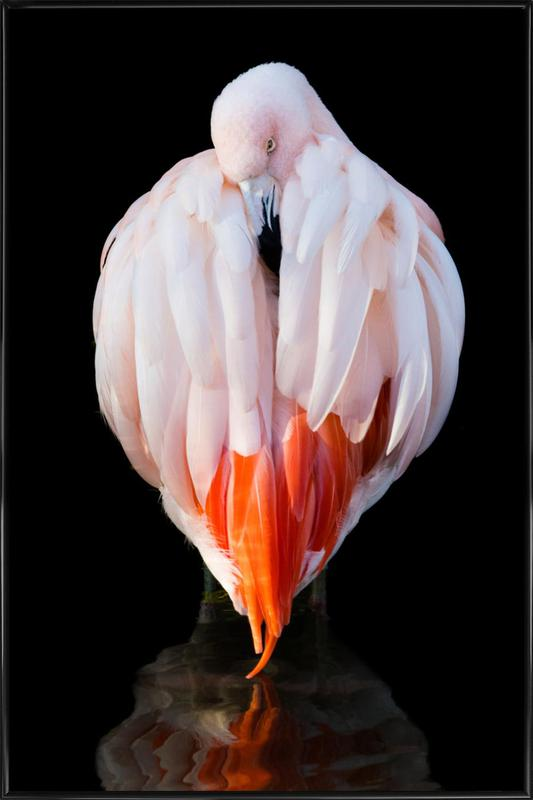 Flamingo in Reflection Poster i standardram