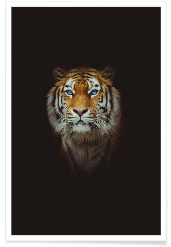 Animales de safari, Tiger in the Night póster