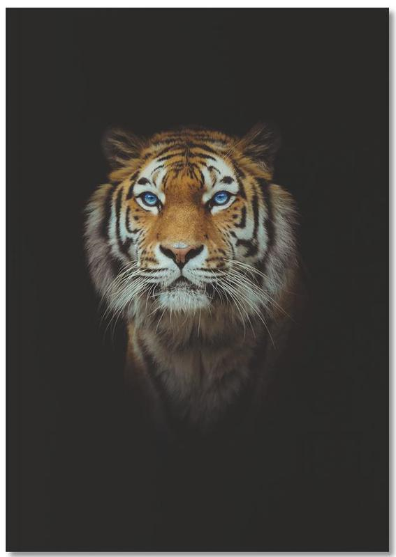 Animaux de safari, Tiger in the Night Notebook