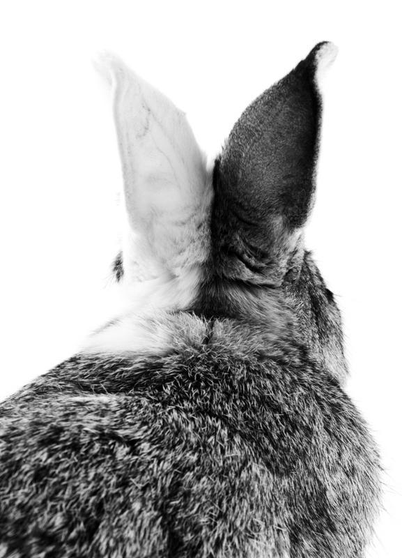 Bunny Ears Black & White Canvastavla