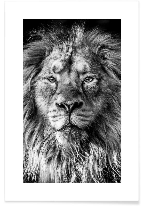 Sort & hvidt, Safari dyr, Leader of the Pack Plakat
