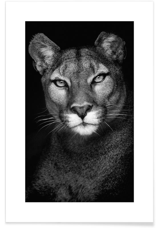 Svart & vit, Safaridjur, Lioness Poster