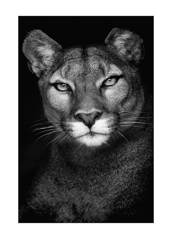 Lioness toile