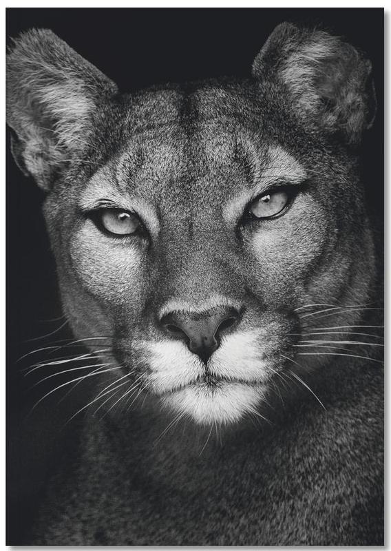 Black & White, Safari Animals, Lioness Notebook