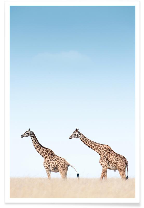 Giraffes Crossing the Savanna -Poster