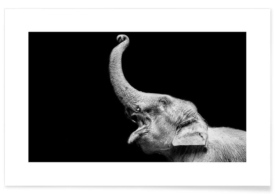 Sort & hvidt, Safari dyr, Elephant Plakat