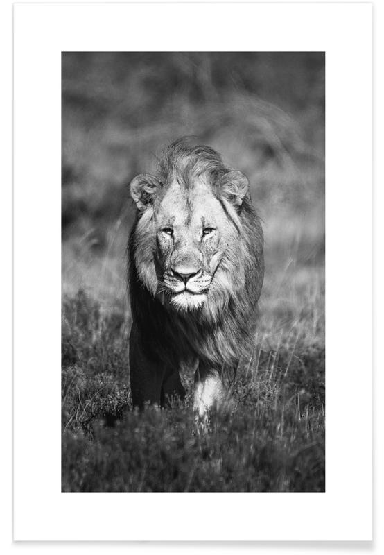Sort & hvidt, Safari dyr, African Heat Plakat