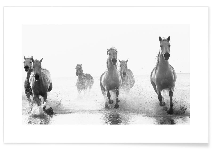Heste, Sort & hvidt, Galloping Through the Surf Plakat