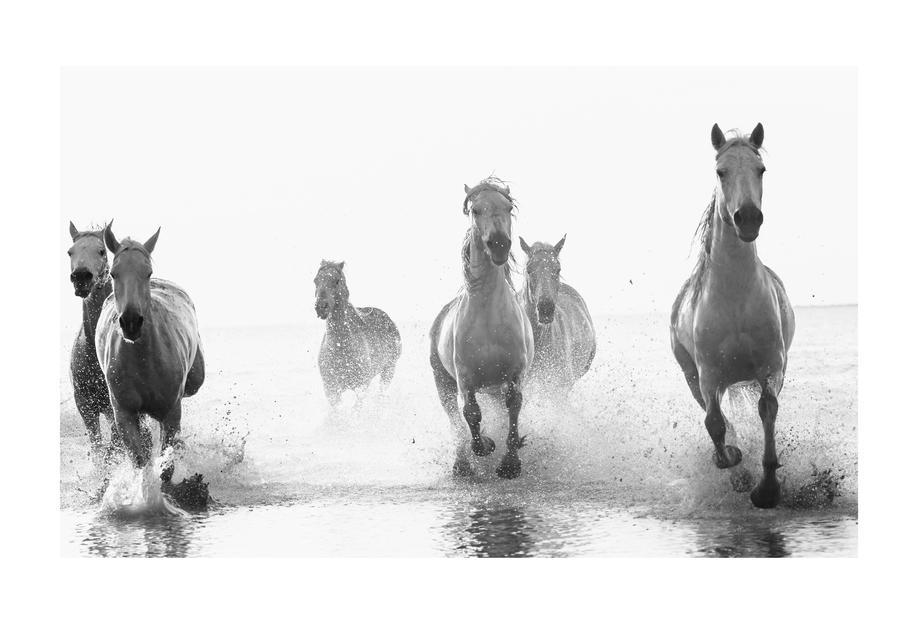 Galloping Through the Surf -Acrylglasbild