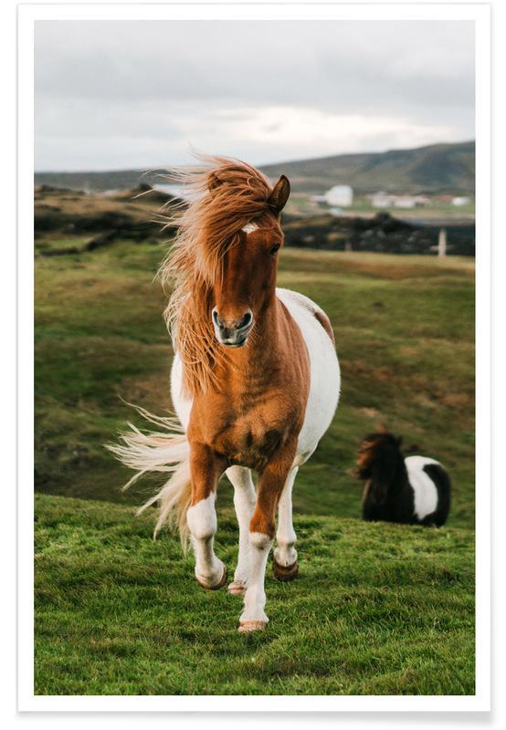 Shetland Ponies affiche