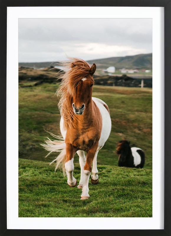 Shetland Ponies Poster i träram