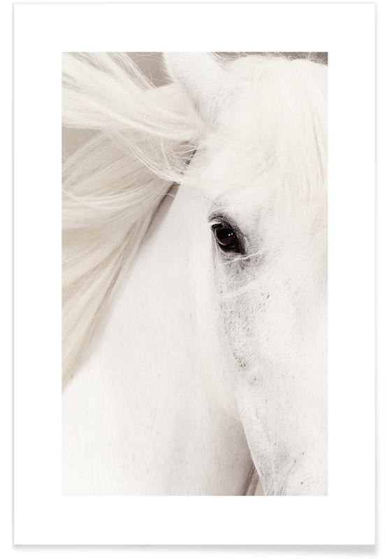 Caballos, Blanco y negro, White Horse póster