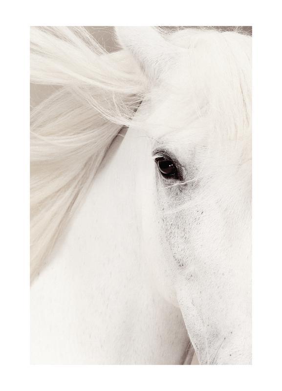 White Horse -Leinwandbild