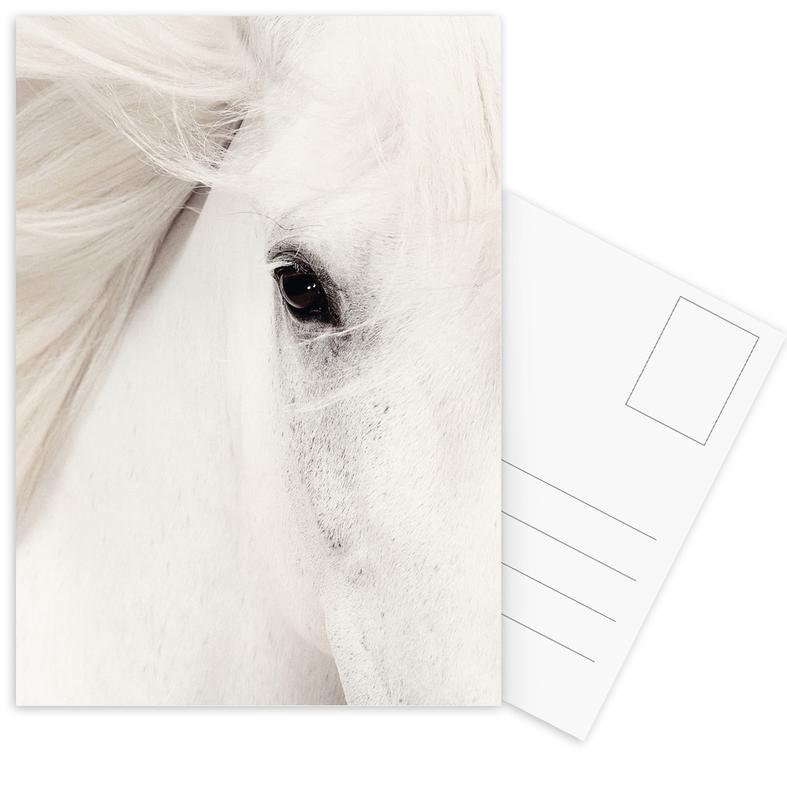 White Horse Postcard Set