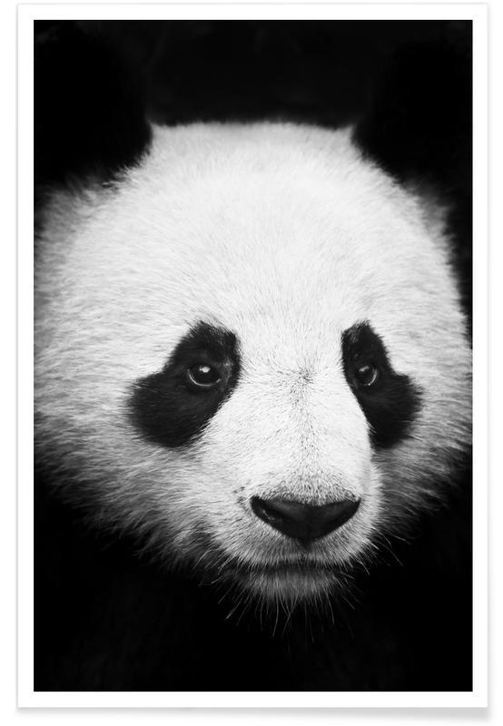 Blanco y negro, Pandas, Panda póster