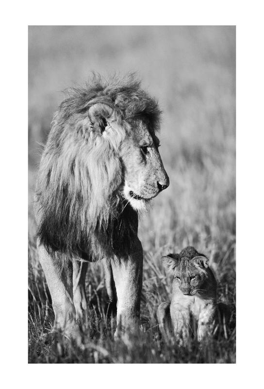 Lion Teaching His Cub Plakat af akrylglas