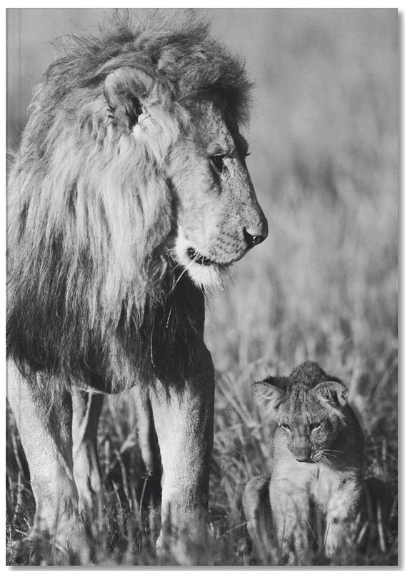 Black & White, Nursery & Art for Kids, Safari Animals, Lion Teaching His Cub Notebook