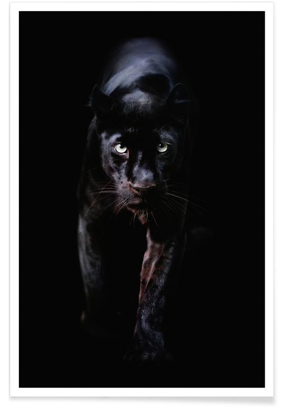 Sort & hvidt, Safari dyr, From the Darkness Plakat