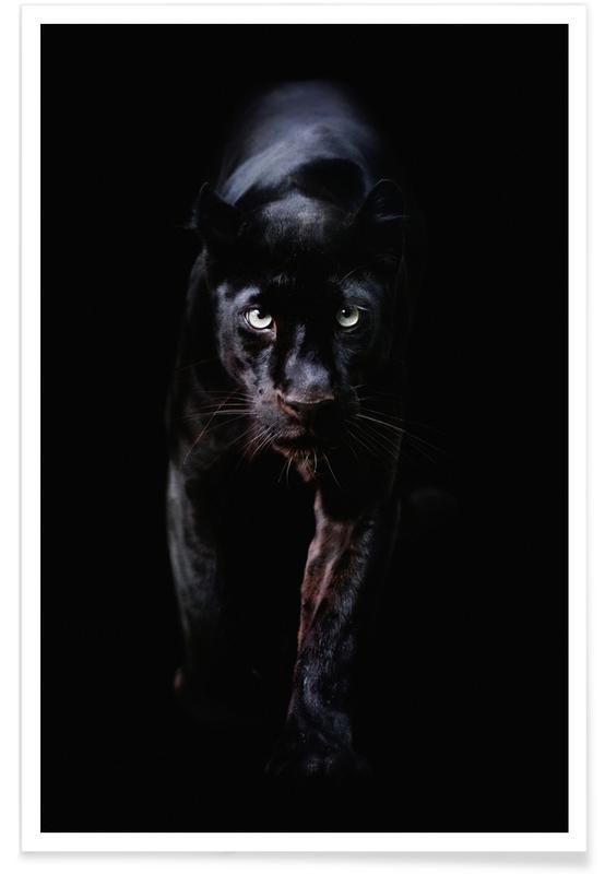 Bianco & nero, Animali da safari, From the Darkness poster