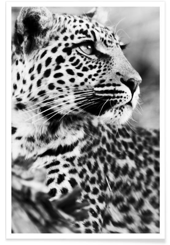 Luipaard foto poster
