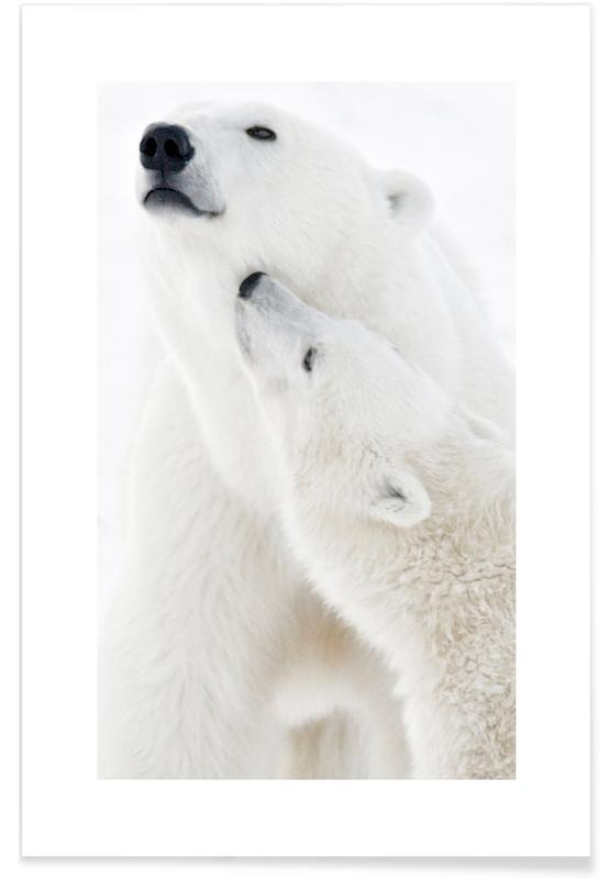 Polar Bears in Snow -Poster