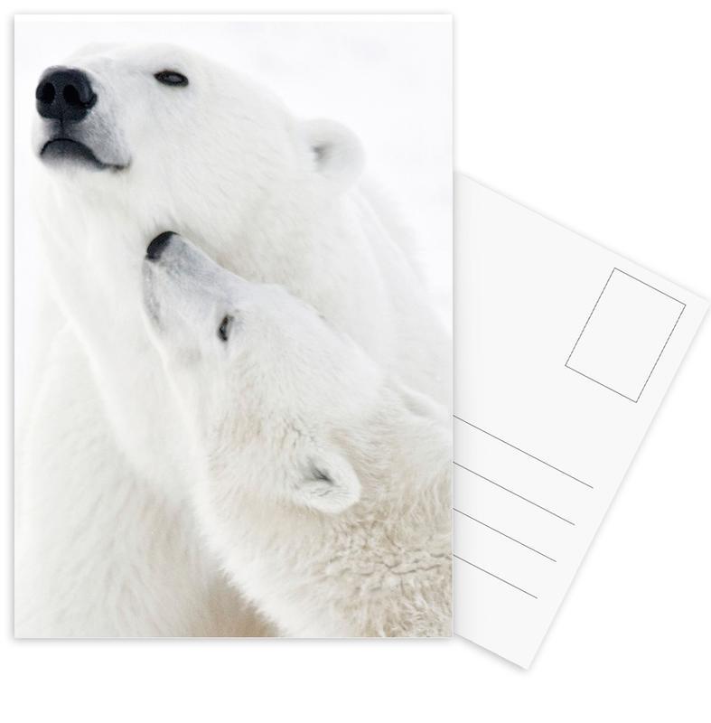 Polar Bears in Snow -Postkartenset