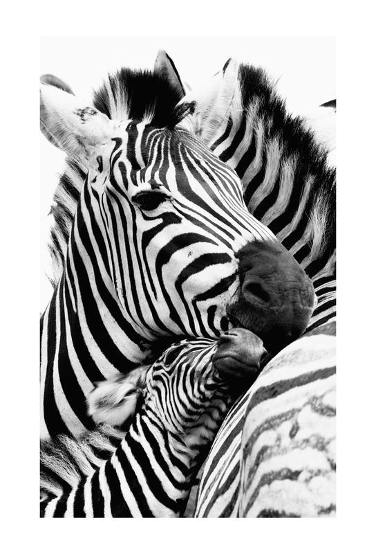 Zebras Aluminiumtavla