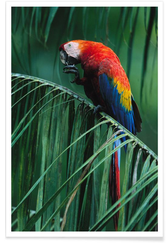 Perroquets, In the Jungle affiche