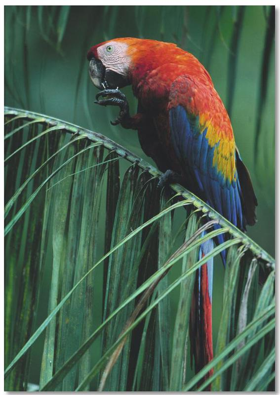 Parrots, In the Jungle Notebook