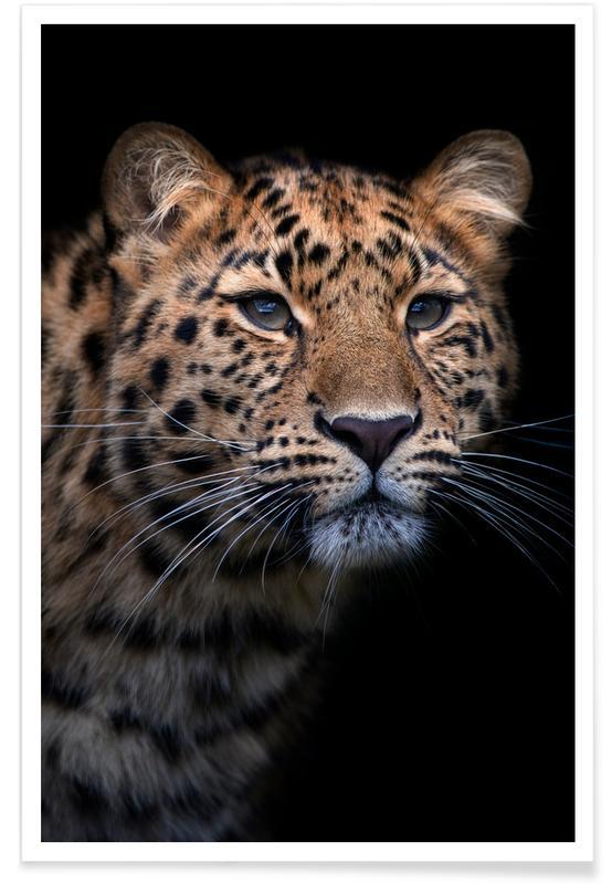 Safari dyr, Waiting to Pounce Plakat