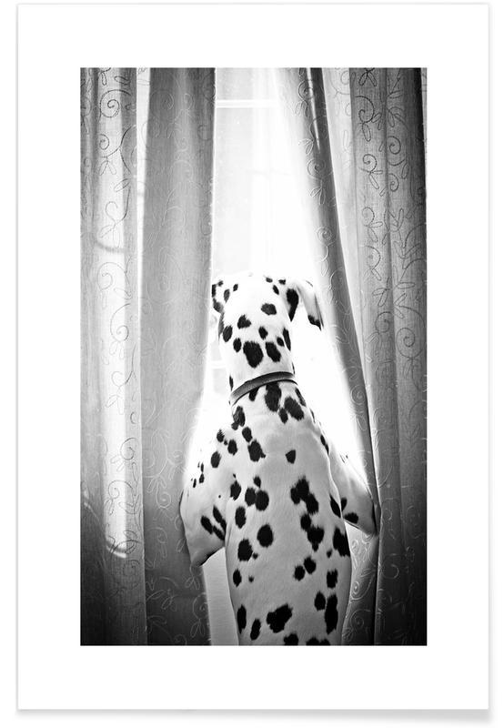 Chiens, Noir & blanc, Curiosity affiche
