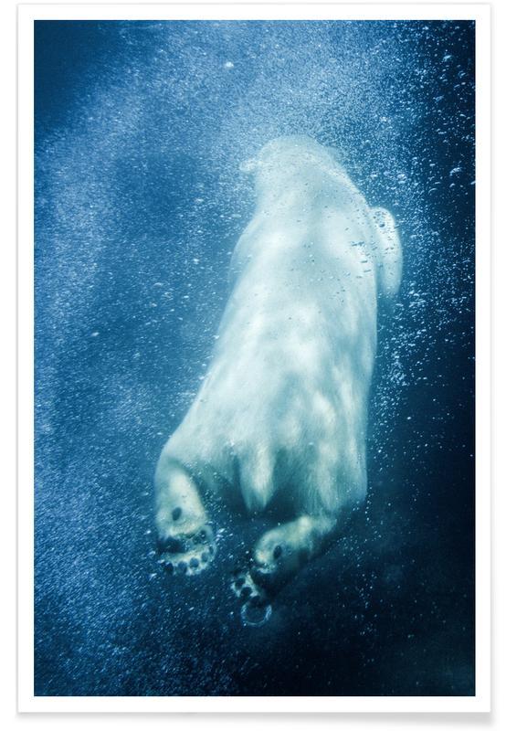 Osos, Polar Explorer póster