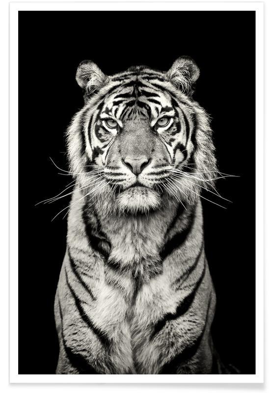 Sort & hvidt, Safari dyr, Head of the Pack Plakat