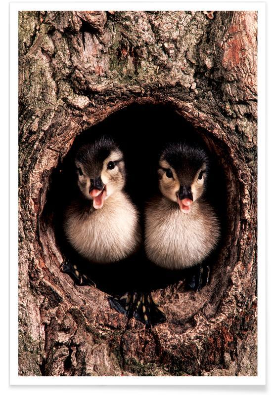 Kunst voor kinderen, Eenden, Chicks poster