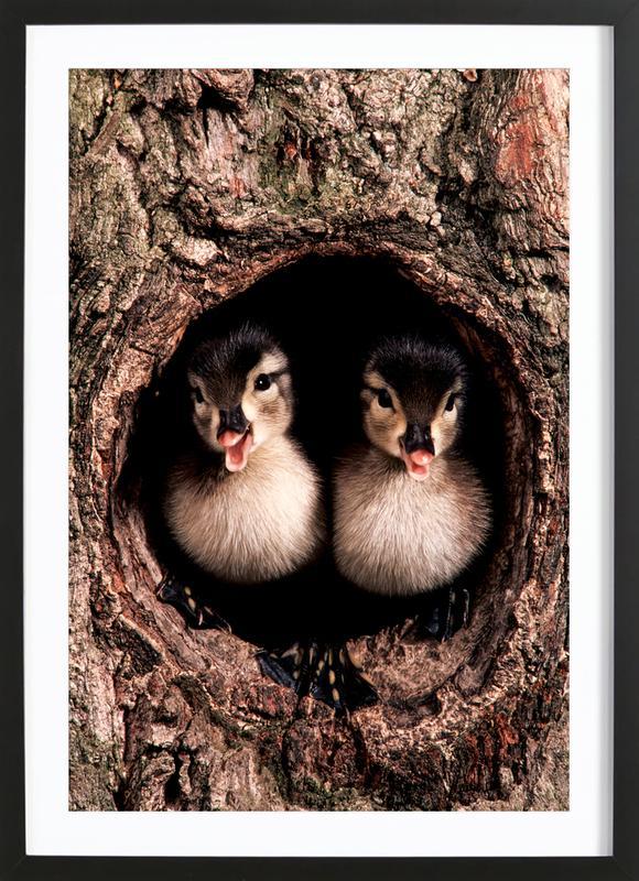 Chicks Poster i träram