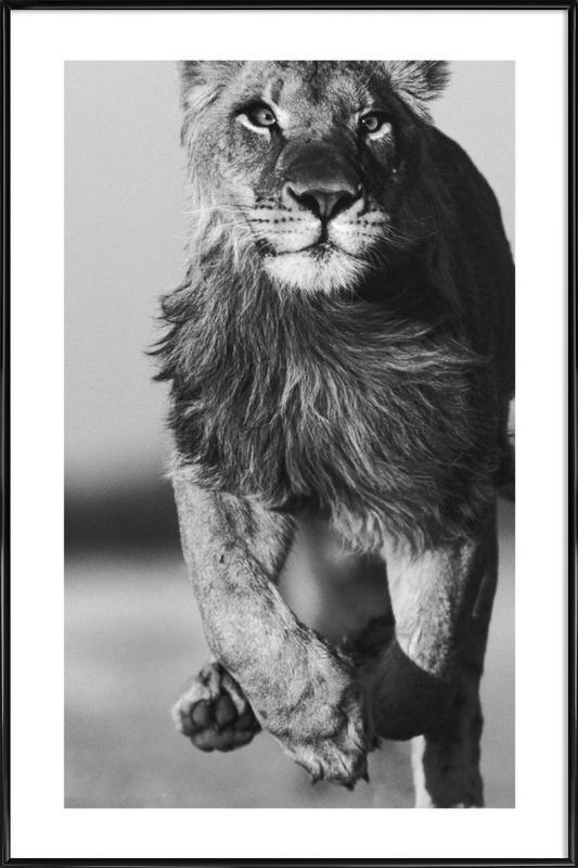 Lion Sprint Framed Poster