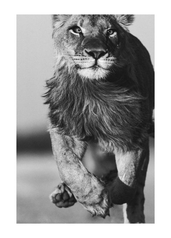 Lion Sprint Canvas Print