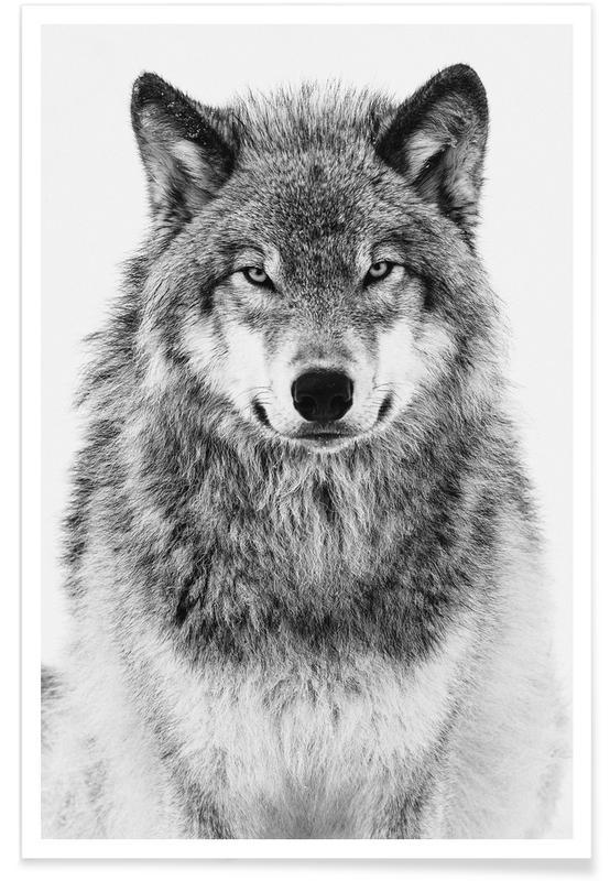 Loups, Un loup en hiver affiche