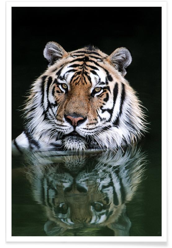 Tigre, Striped Reflections Plakat