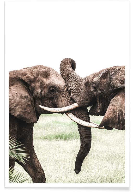 Animaux de safari, Elephants at Play affiche