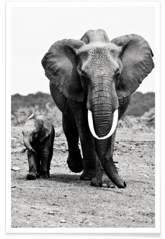 Noir & blanc, Animaux de safari, Famille d'éléphants affiche