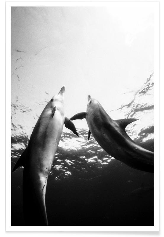 Sort & hvidt, Delfiner, Keep Swimming Plakat