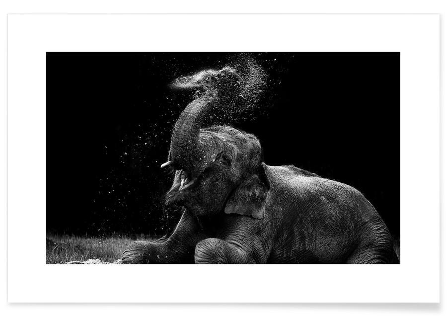 Noir & blanc, Animaux de safari, Frolicking Elephant affiche