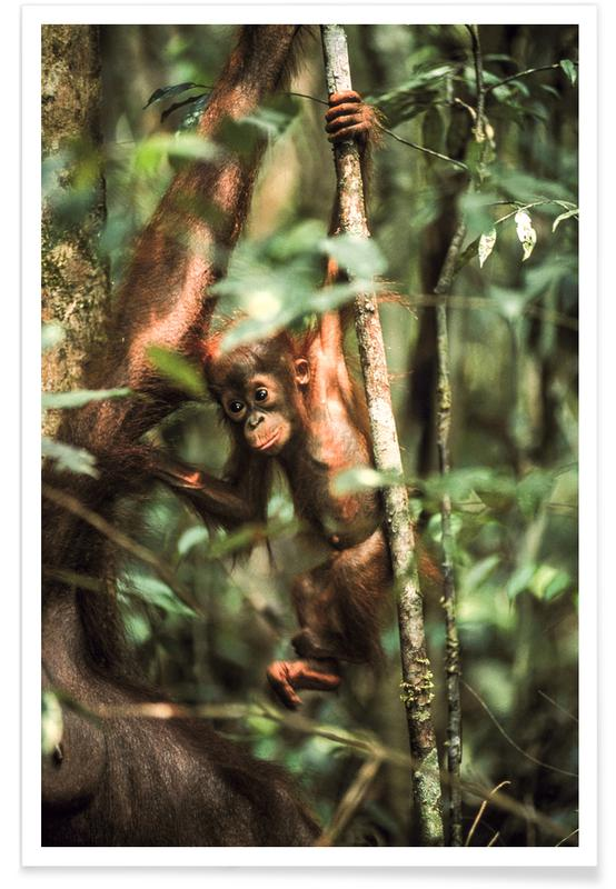 Aber, Monkey Business Plakat